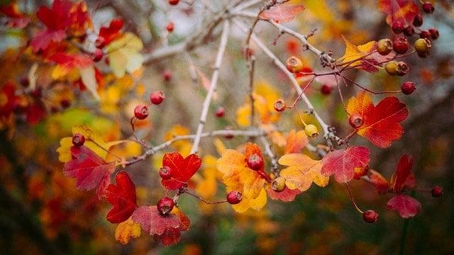 Why Autumn is my favourite season